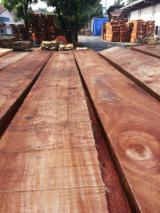 Indonezija - Fordaq Online tržište - Okrajčena Daska, Gumeno Drvo, Vakuumski Osušene