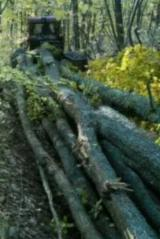 Usluge I Poslovi - Održavanje Šuma, Rumunija