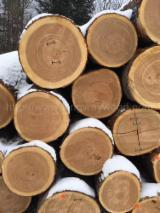 Find best timber supplies on Fordaq - Kingway GmbH - Ash Logs 2SC+