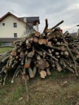 Poplar Hardwood Logs - -- mm Hornbeam, Poplar, Oak Firewood Romania
