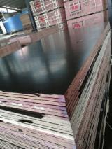 Find best timber supplies on Fordaq - Linyi Huabao Import and Export Co.,Ltd - Full Poplar Film Faced Plywood