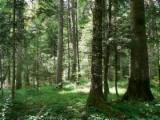 Woodlands - Oak / Ash / Beech Woodland 2,78 acres