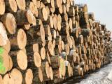 Birch  Hardwood Logs - A/B Birch Veneer Logs 18-25; 26+ cm