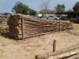 Rubberwood Hardwood Logs - Eucalyptus Poles with bark 2.5