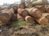 Forest And Logs Demands - Doussie Round Logs 80+ cm