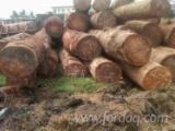Saw Logs - Doussie Round Logs 80+ cm
