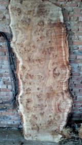 毛边材-圆木剁, 白杨