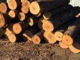 Oak  Hardwood Logs - US Red Oak Logs Veneer 16