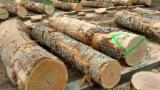 Forêts Et Grumes Amérique Du Nord - Vend Grumes De Tranche Chêne Blanc