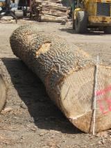 USA Hardwood Logs - Poplar Logs 0-4 Sides Clean 10-12