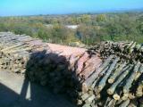 Wälder und Rundholz - Schnittholzstämme, Buche, FSC