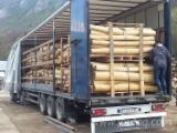Austria Hardwood Logs - Acacia Saw Logs 8 - 25 cm