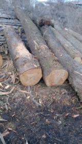 Cherry  Hardwood Logs - 28+ cm Cherry Saw Logs from Romania