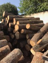 Offers Bulgaria - Basswood Logs 18-99 cm