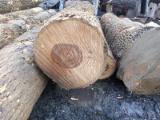 森林和原木 北美洲  - 锯材级原木, 灰