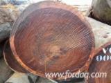 Tali Hardwood Logs - Tali Logs 100 cm