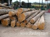 Forest And Logs Asia - Teak Saw Logs 25+ cm