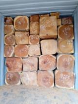 Tronchi Da Triturazione - Vendo Tronchi Da Triturazione Rosewood Africano, Machibi, Copalwood Della Rhodesia