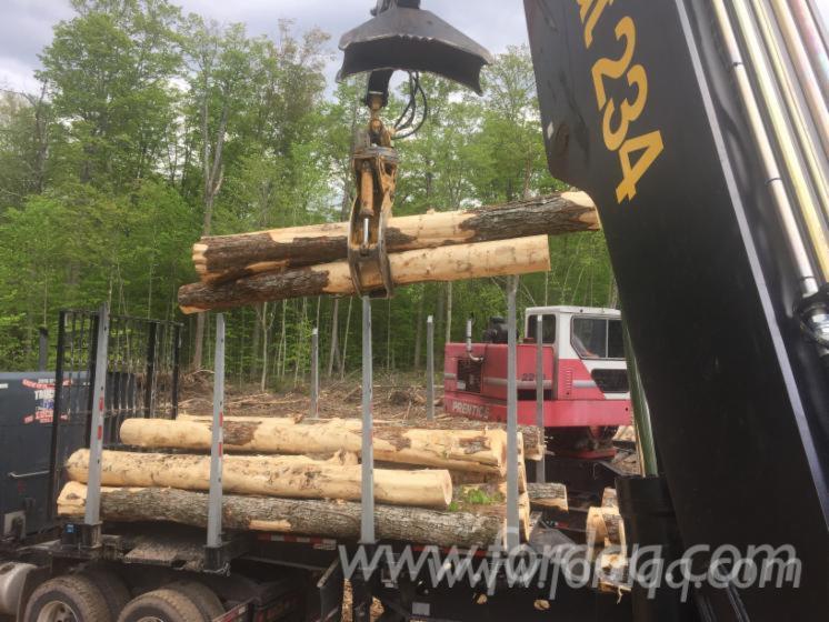 Hard-Maple-Saw-Logs-12
