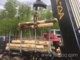 森林和原木 北美洲  - 锯材级原木, 硬枫木