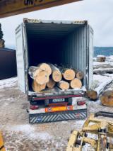Germany Hardwood Logs - Beech Saw Logs 30+ cm
