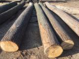 Hardwood Logs Suppliers and Buyers - Tilia Saw Logs 25+ cm