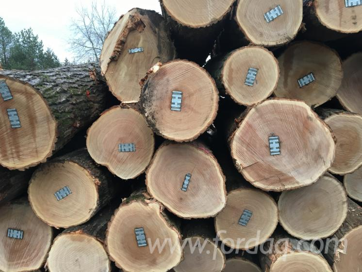 Basswood---Black-Walnut---Red-Oak-Logs-18-