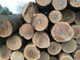 Wälder Und Rundholz - Schnittholzstämme, Linde, Walnuss , Roteiche