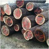 Bossen en Stammen - Zaagstammen, Notelaar, Hickoryhout, Witte Eik