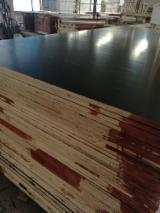 上Fordaq寻找最佳的木材供应 - Linyi Huabao Import and Export Co.,Ltd - 覆膜胶合板(黑膜), 桉树