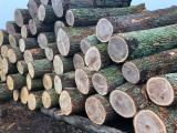 Wälder und Rundholz - Furnierholz, Messerfurnierstämme, Eiche, FSC