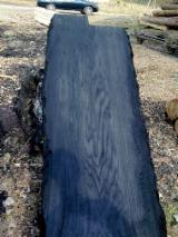 Hardwood Logs Suppliers and Buyers - Bog Oak Square Logs 30 cm