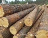 Meko Drvo  Trupci Za Prodaju - Za Rezanje, Sibirski Bor