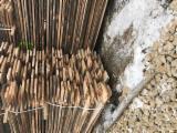 Laubholz  Blockware, Unbesäumtes Holz Polen - Loseware, Buche