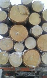 俄罗斯 供應 - 锯材级原木, 新疆云杉