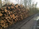 Forest And Logs France - Beech Industrial Logs 10+ cm