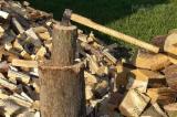 供应 白俄罗斯 - 劈好的薪柴-未劈的薪柴 薪碳材/未开裂原木 桦木, 角树, 橡木