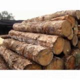 Wälder Und Rundholz Ozeanien  - Schnittholzstämme, Kautschukbaum, Ironbark, Sandelholz
