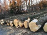 Hardwood Logs  - Fordaq Online market - ABC White Oak Logs 40+ cm