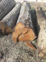 森林和原木 欧洲  - 锯材级原木, 胡桃木