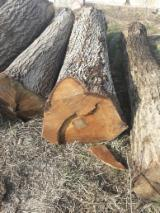 Serbia Supplies - Walnut Logs 30+ cm a/b/c