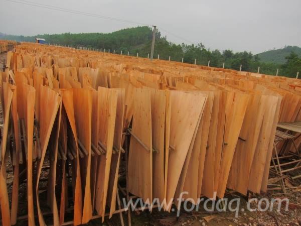 Eucalyptus Rotary Cut Veneer