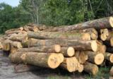 Laubrundholz  Esche Weiß- - Schnittholzstämme, Esche , Buche, Eiche
