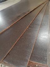 木皮和单板 亚洲  - 覆膜胶合板(棕膜), 白杨