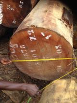 日本 - Fordaq 在线 市場 - 锯材级原木, 筒状非洲楝木