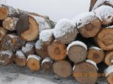 Saw Logs - Birch Saw Logs 18+ cm