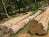 印度 供應 - 木杖,木钉,棍杖材, 柚木