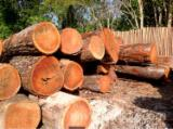 Padouk Hardwood Logs - Sapelli / Tali / Padouk / Bilinga Logs 70+ cm