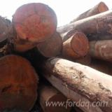 Forest And Logs Asia - Okan / Doussie / Pau Rosa Logs 60 cm