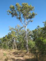 Bossen En Stammen Oceanië  - Industrieel Hout, Gum